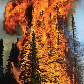 Timber Harvesting: How to Stop Wildfires from Getting Worse