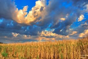 """Palouse Wheat Field Sunrise"" via Charles Knowles on flickr"